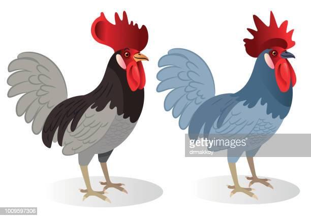 delaware blue hen - chesapeake bay stock illustrations, clip art, cartoons, & icons