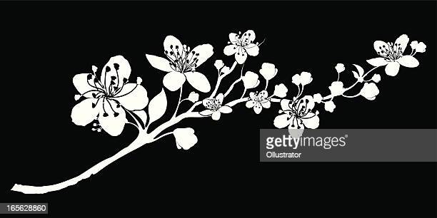 delicate silhouette of a branch abloom - cherry blossom stock illustrations, clip art, cartoons, & icons