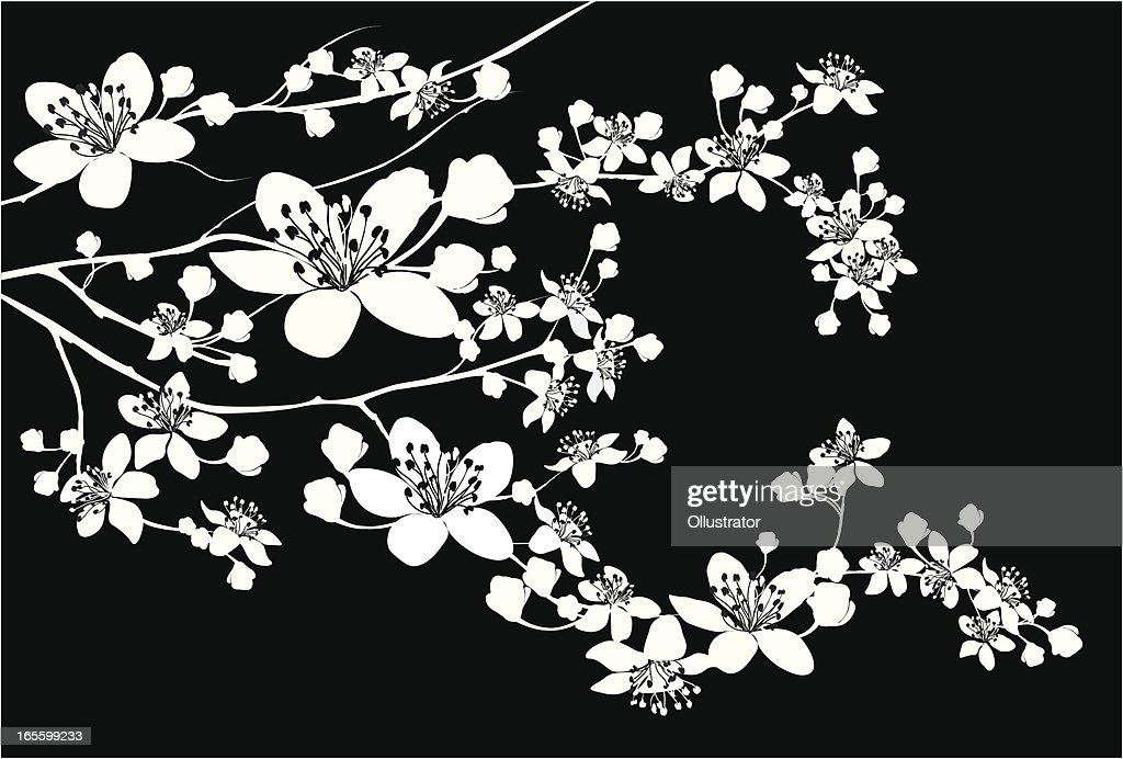 Delicate Silhouette of blooming branch