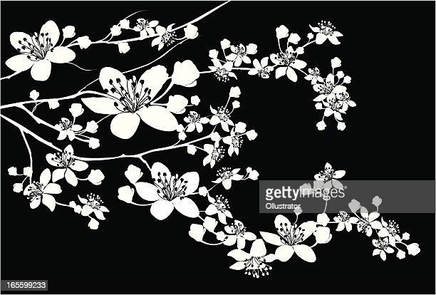 delicate silhouette of blooming branch - flowering trees stock illustrations, clip art, cartoons, & icons