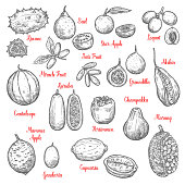 Delicious exotic tropical fruits sketches isolated