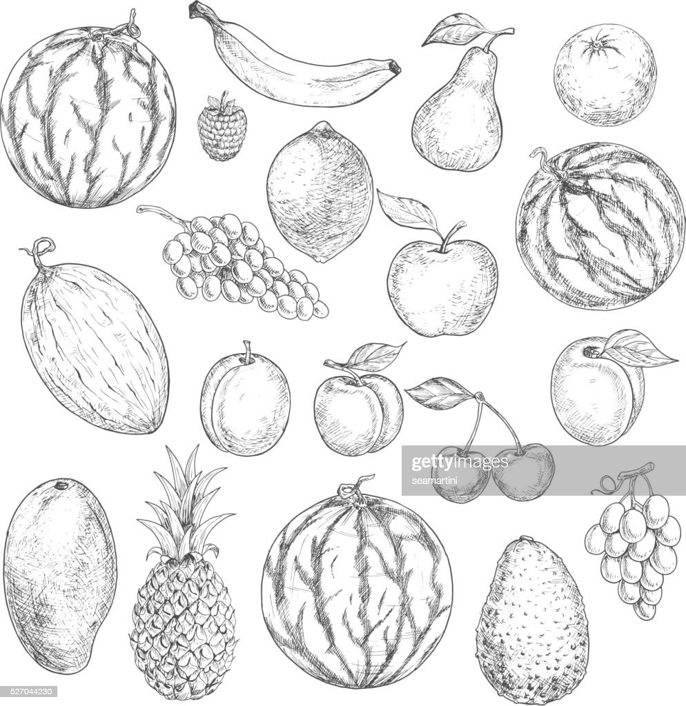 Delicious fresh harvested summer fruits sketches
