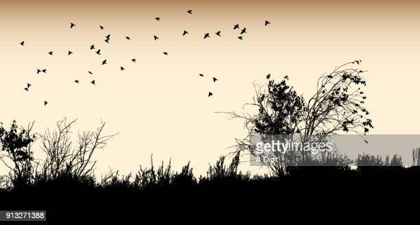Desert Plant Birds