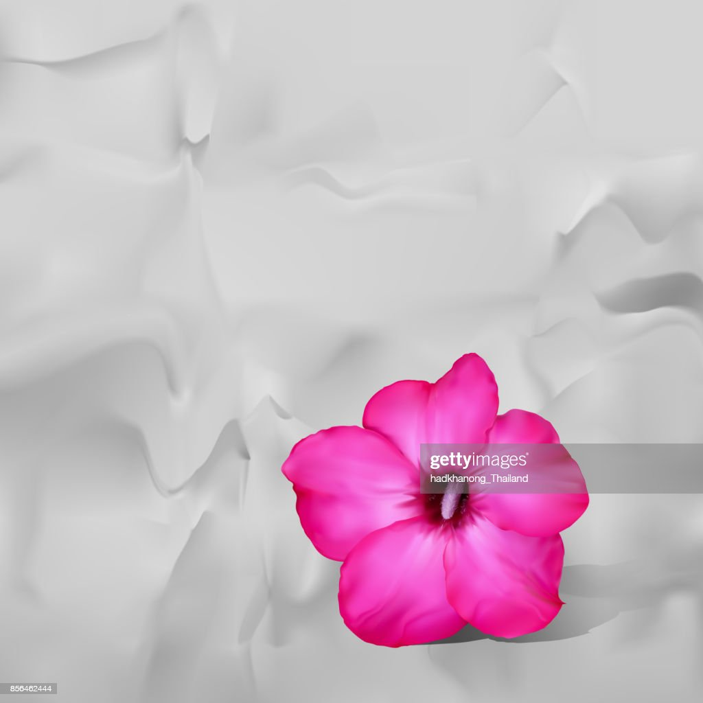 Desert Rose Flower With Shadow On White Paper Background Vector Art