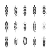 Design elements. Agriculture grain, organic plant, bread food, natural harvest.