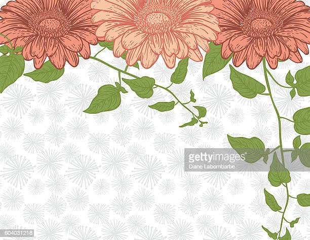 detailed botanical floral background - gerbera daisy stock illustrations, clip art, cartoons, & icons