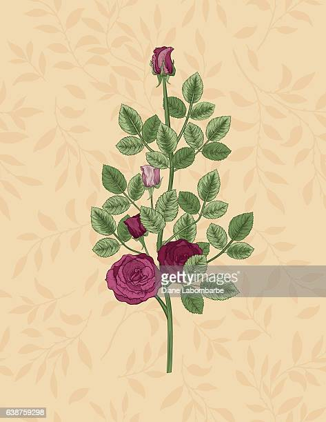Detailed Botanical Style Roses On A Pattern Of Leaves