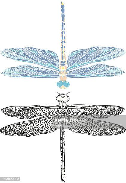 detailed dragonfly illustation outline and mosaic style