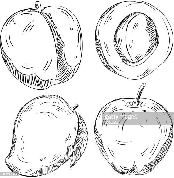 detailed drawings of fruits - mango fruit stock illustrations, clip art, cartoons, & icons