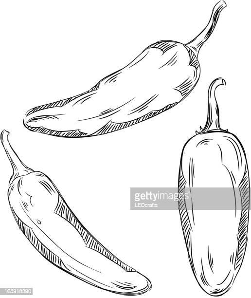 detailed drawings of jalapeno - jalapeno pepper stock illustrations