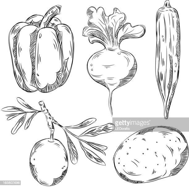 detailed drawings of vegetables - turnip stock illustrations, clip art, cartoons, & icons