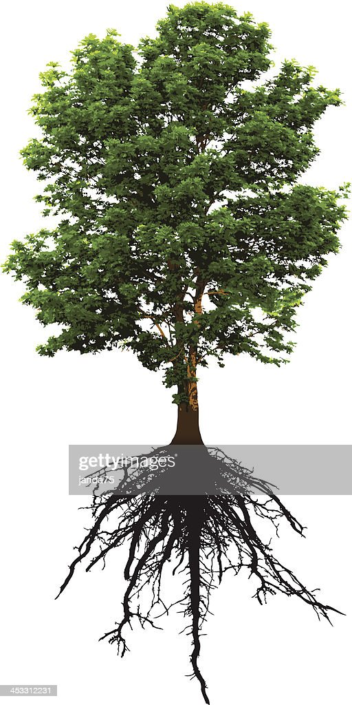 Detailed Green Tree and it's Intricate Roots Below