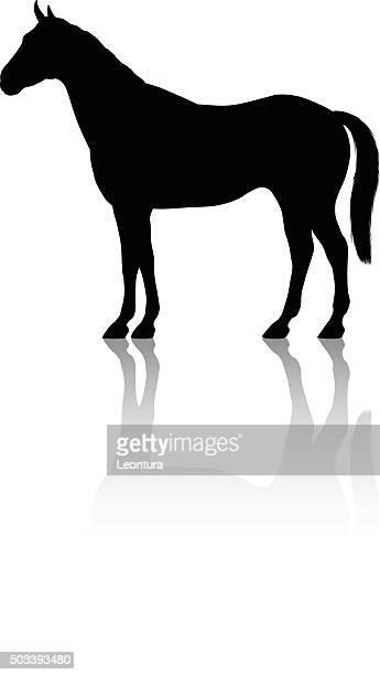 ilustraciones, imágenes clip art, dibujos animados e iconos de stock de detallada caballos silueta - caballo familia del caballo