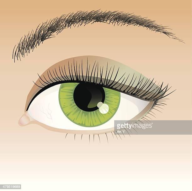 ilustrações, clipart, desenhos animados e ícones de detalhada olho humano - sobrancelha