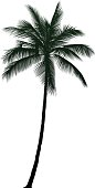 Detailed Palm Tree