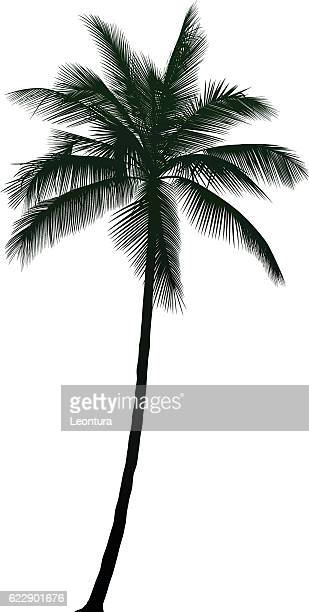 detailed palm tree - coconut palm tree stock illustrations, clip art, cartoons, & icons