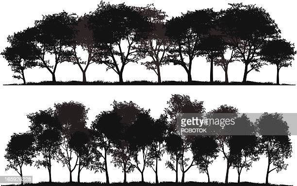 detailed silhouettes of trees - grove stock illustrations, clip art, cartoons, & icons