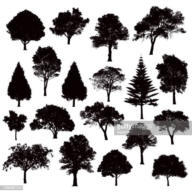 detailed tree silhouettes - illustration - in silhouette stock illustrations