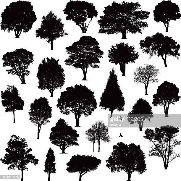 detailed tree silhouettes - plain background stock illustrations