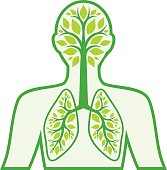 A diagram in green of the human respiratory system