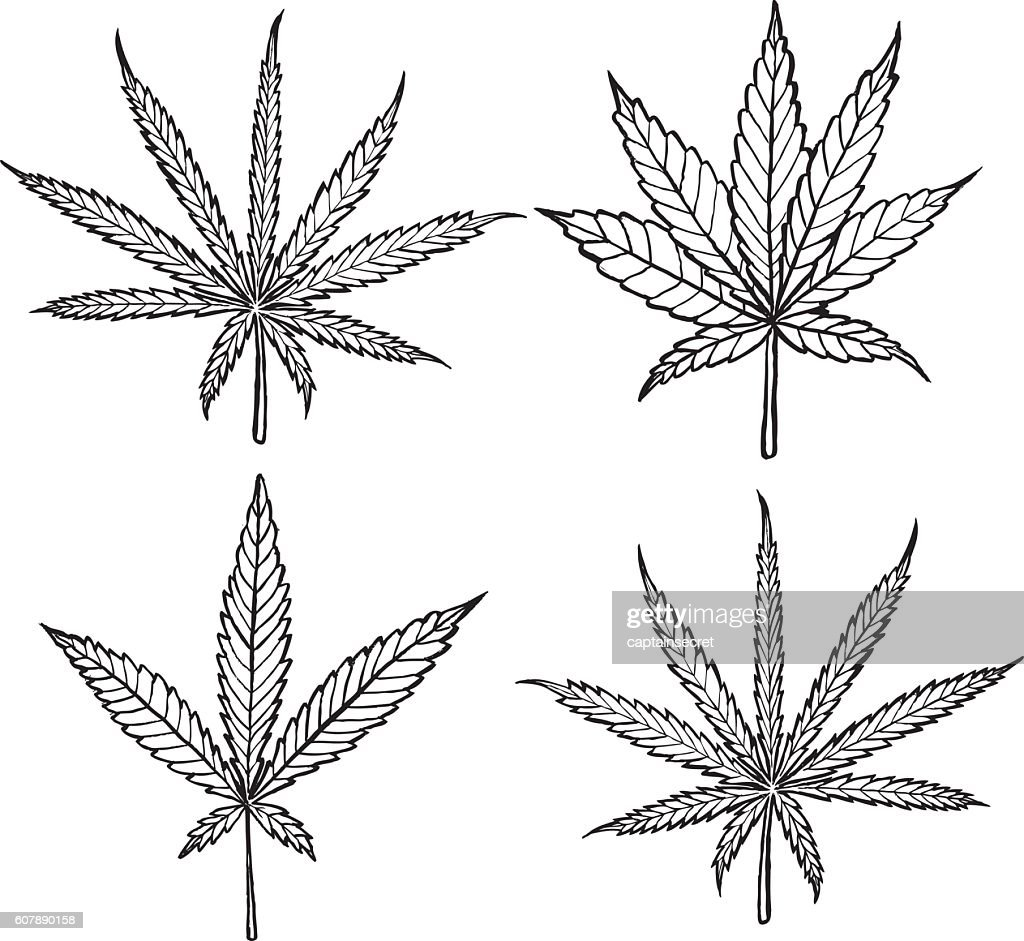 Cannabis Leaves Diagrams - Application Wiring Diagram •