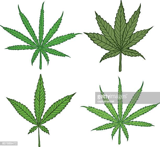 Diagram of different cannabis leaf varieties - colour
