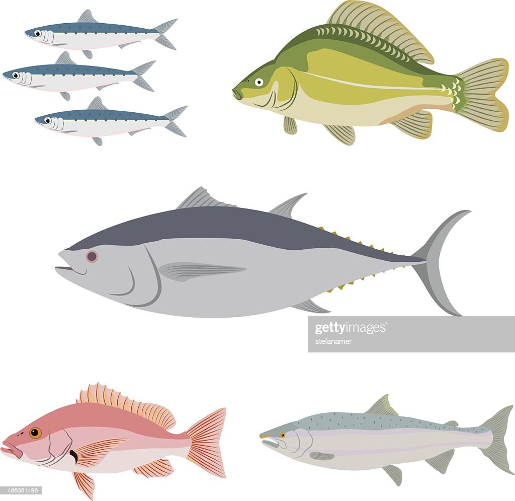 Difference kind of fish, river and sea food