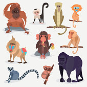 Different cartoon monkey breed character animal wild zoo cute ape chimpanzee vector illustration
