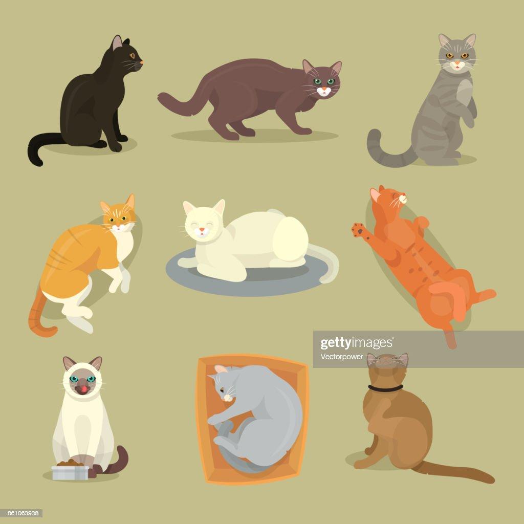 Different cat breeds cute kitty pet cartoon cute animal cattish character set catlike illustration