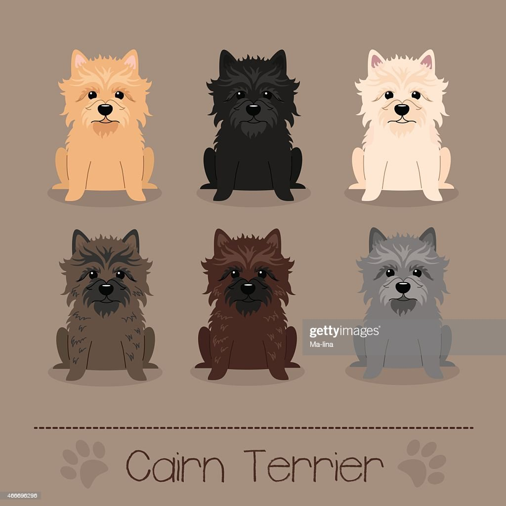 Different colors Cairn Terrier