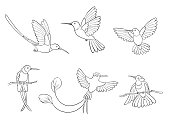 Different hummingbirds in outlines - vector illustration