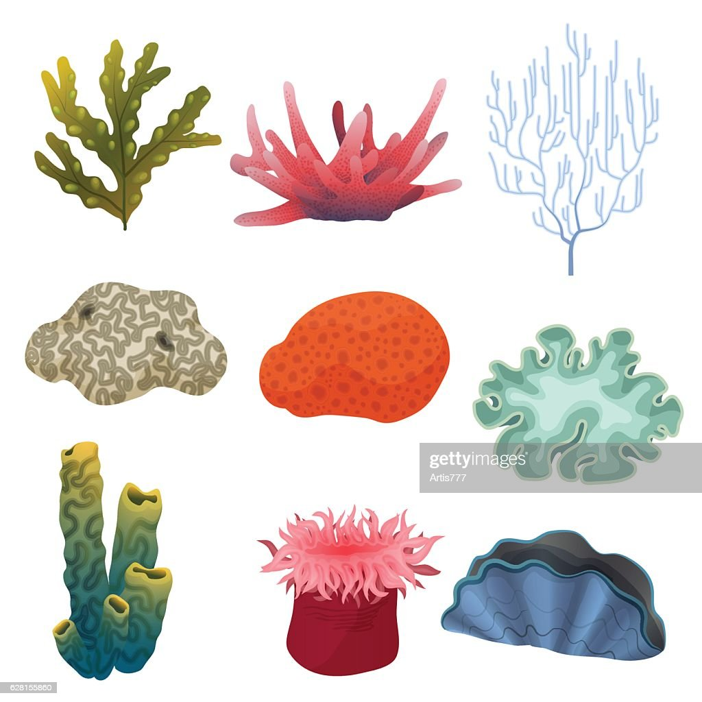 Different Kind Of Cartoon Underwater Plants And Color Reef Coral