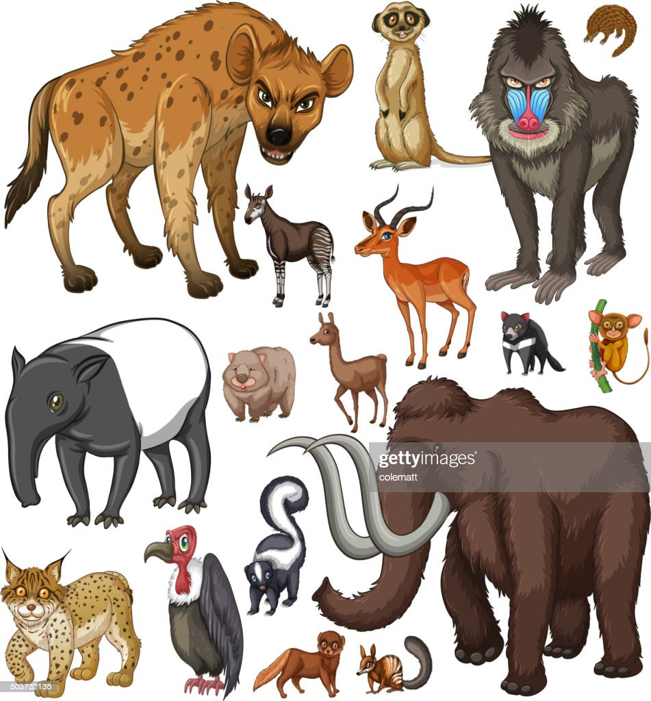 Different kind of wild animals