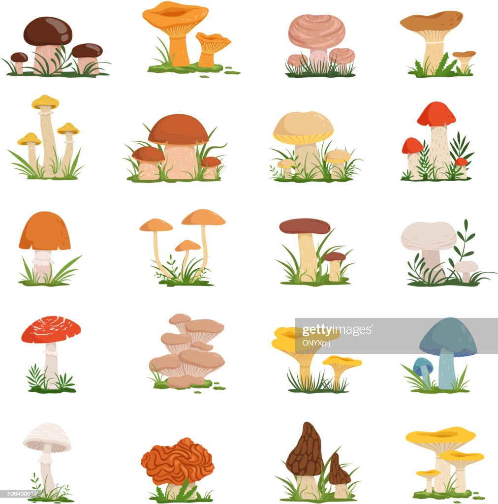 Different mushrooms on green grass. Vector set