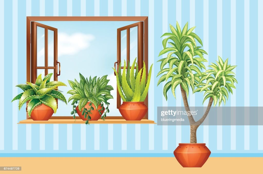 Different plants in claypot in the room