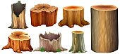 Different type of tree stump
