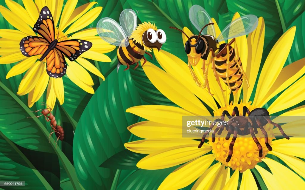 Different Types Of Bugs Flying Around Yellow Flowers Vector Art