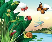 Different types of insects at the pond