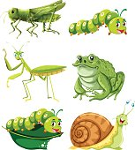 Different types of insects in green color