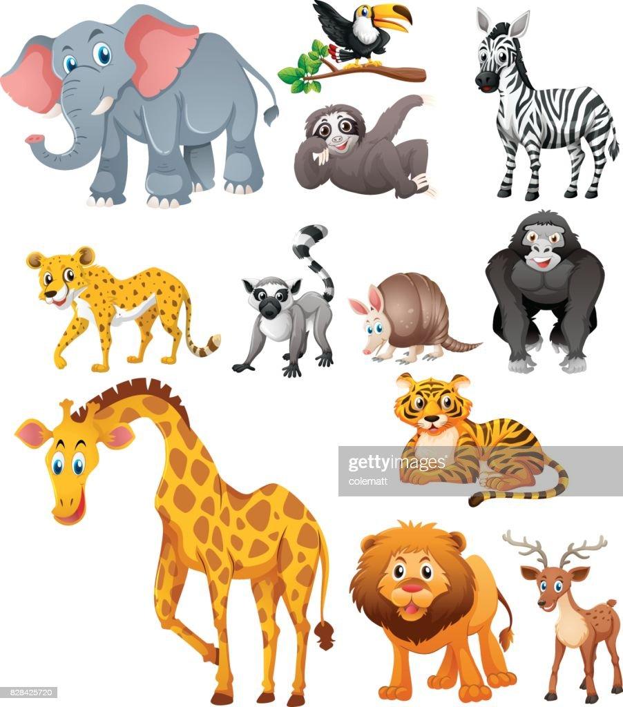 Different types of wild animals