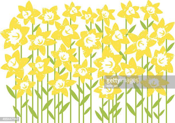 digital artwork of a field of daffodils isolated on white - field of daffodils stock illustrations
