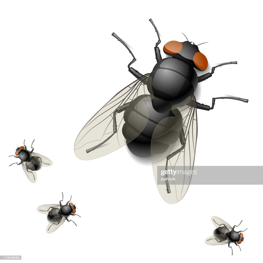 Digital rendering image of one big and three tiny houseflies