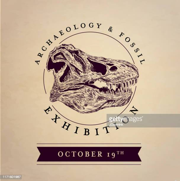 dinosaur and fossil exhibition museum design with t-rex skull fossil sketch style - archaeology stock illustrations