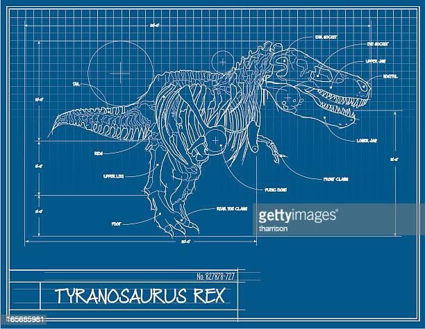 ilustrações de stock, clip art, desenhos animados e ícones de dinossauro cópia heliográfica - dinossauro desenho