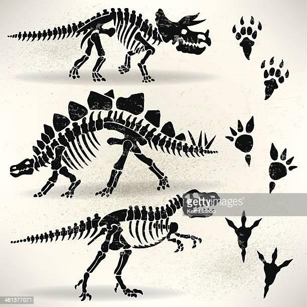 dinosaur foot prints, tyrannosaurus rex, stegosaurus,triceratops - thyreophora stock illustrations, clip art, cartoons, & icons