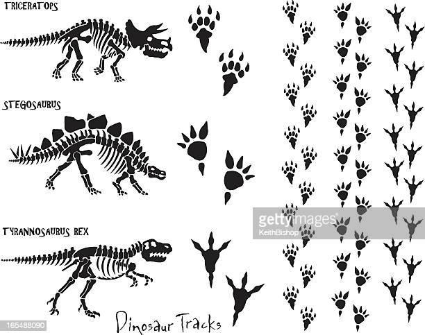 dinosaur skeleton & footprints - animal skeleton stock illustrations, clip art, cartoons, & icons