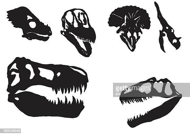 ilustraciones, imágenes clip art, dibujos animados e iconos de stock de cráneos de dinosaurios - triásico