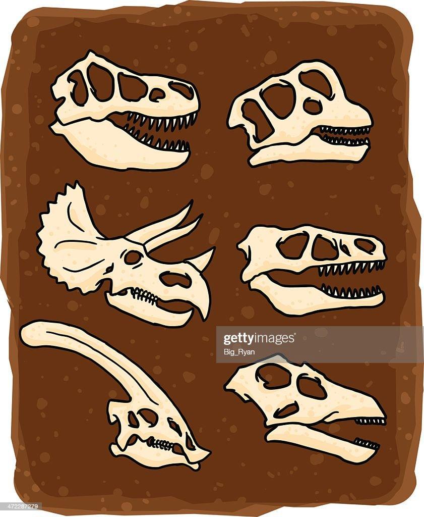 dinosaur skulls : stock illustration