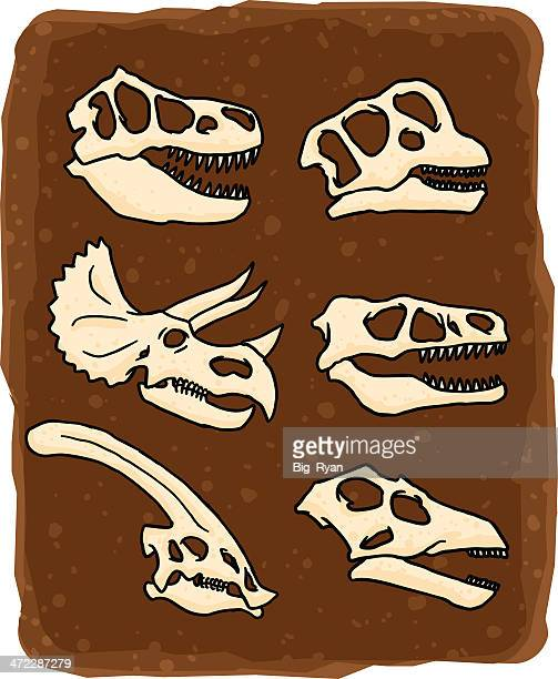 dinosaur skulls - velociraptor stock illustrations