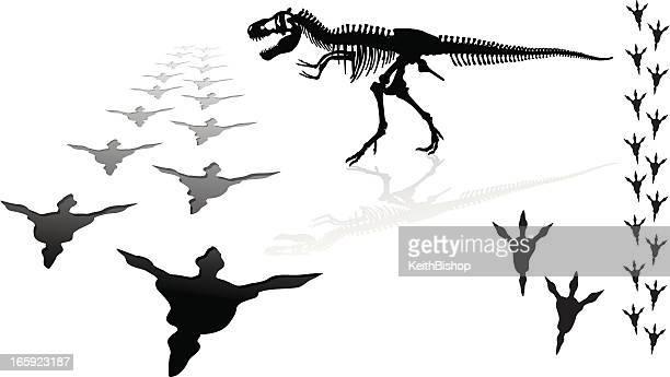 dinosaur - tyrannosaurus rex - animal skeleton stock illustrations, clip art, cartoons, & icons